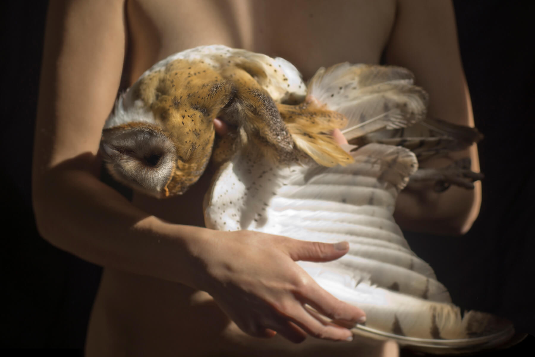 A photograph, dramatically lit, in which a white woman's naked torso is seen cradling in her arms the body of a light brown and white owl, with its white-feathered wing extended downward.